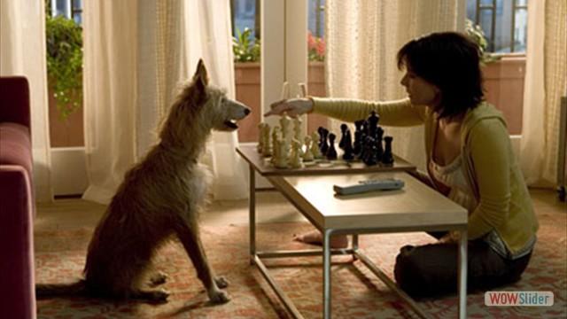 14.A Casa do Lago (2006)
